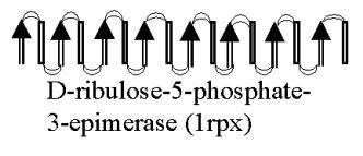 D-Ribulose 5-Phosphate 3-Epimerase